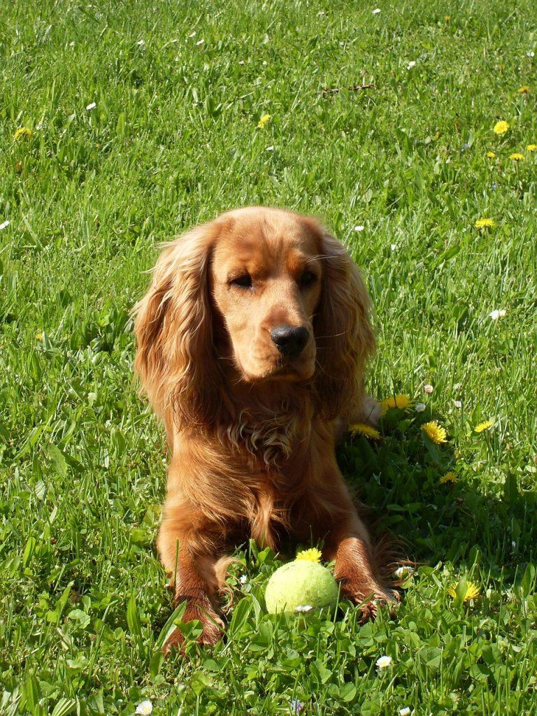 dog-1010395_1280