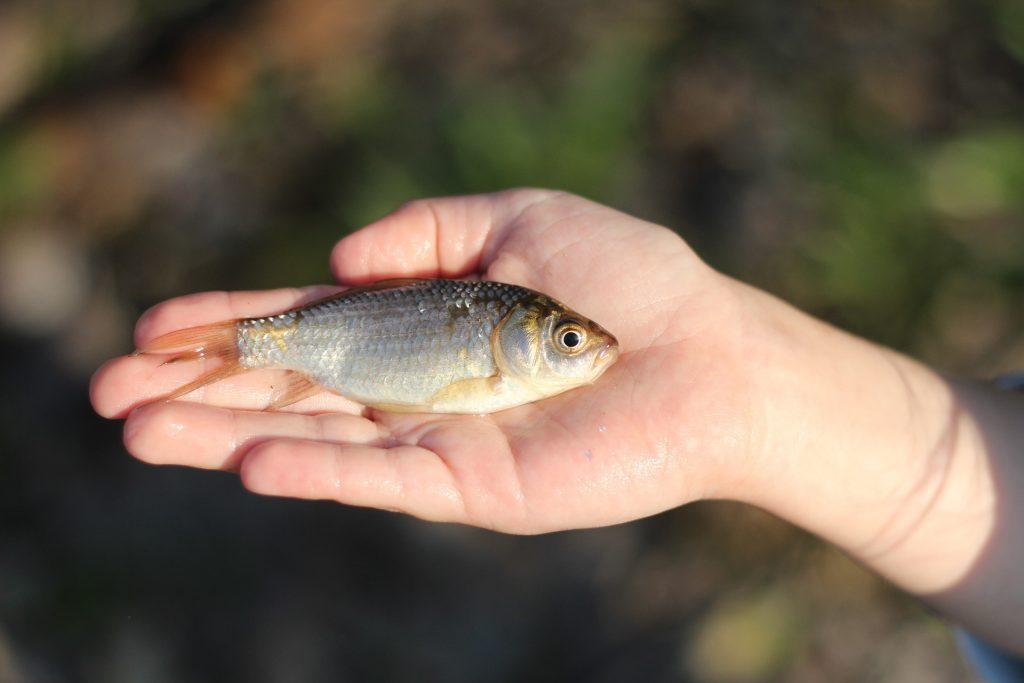 Foto Die Begegnung mit dem (toten) Fisch