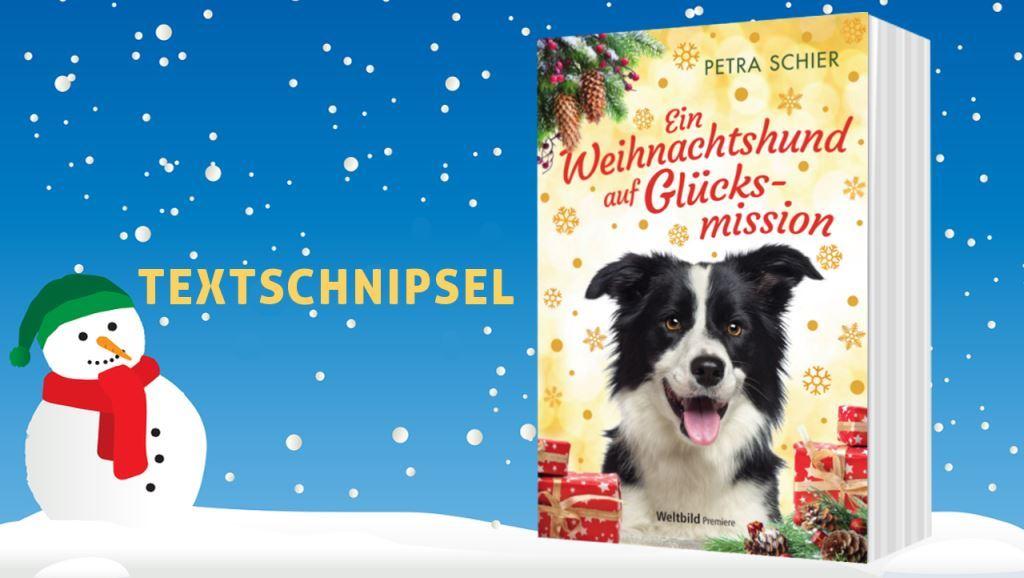 Banner Textschnipsel Nr. 1: Ein Weihnachtshund auf Glücksmission