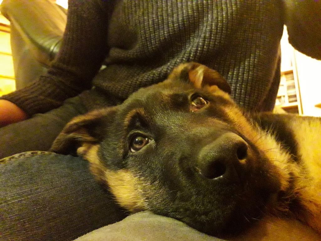 Foto Arthos ist müde