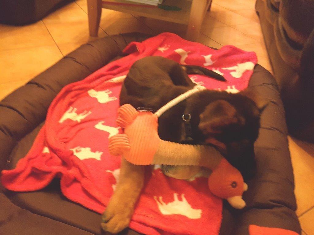 Foto 4 Arthos mit Olli