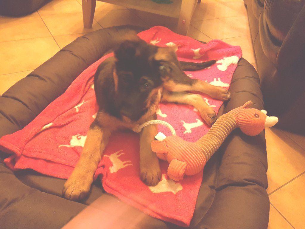 Foto 3 Arthos mit Olli