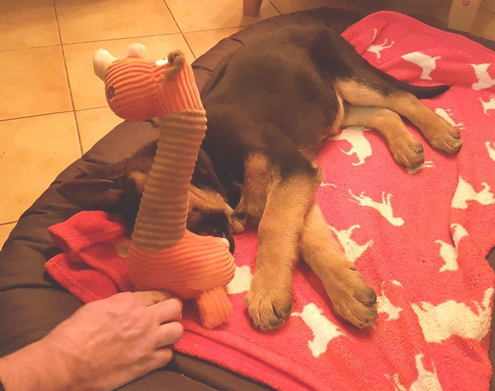 Foto 1 Arthos mit Olli