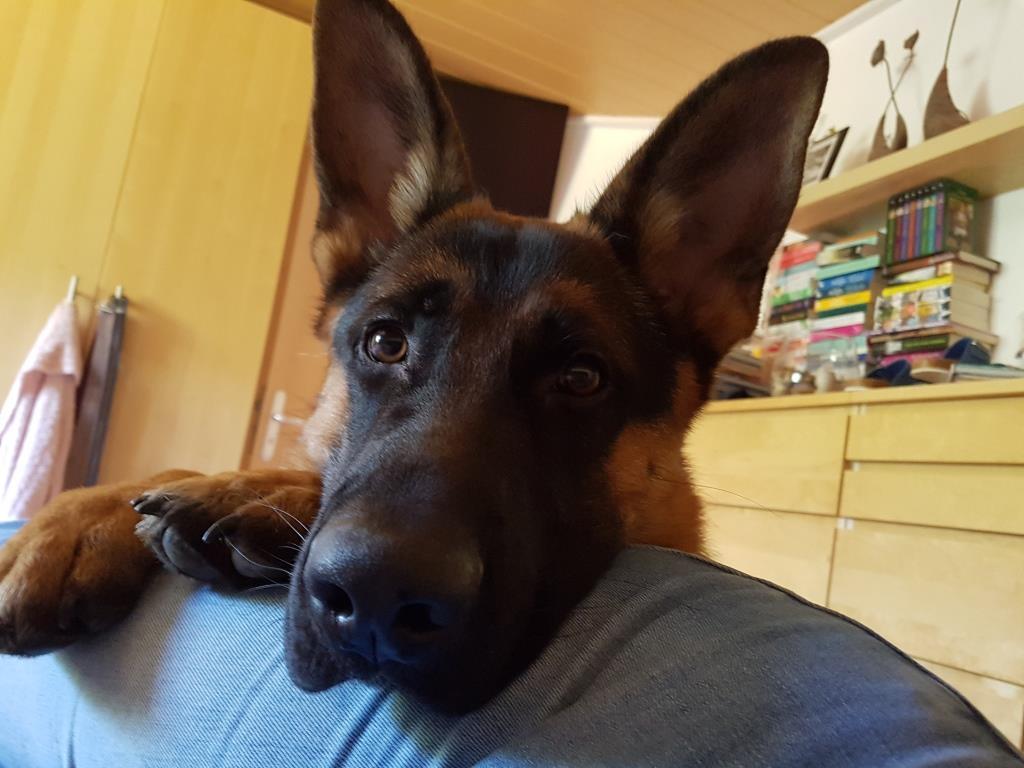 Arthos, der Problemhund ...