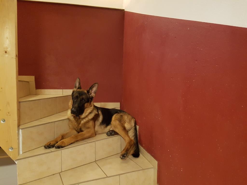 Arthos der Problemhund